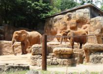 Зоопарк Гринвилл