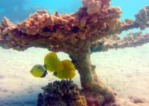 Риф бухты Макади