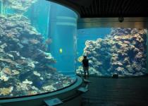 Национальный музей-аквариум биологии моря