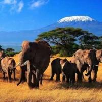 Отдых кения цены 2014