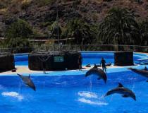 Дельфинарий в Moonlight Park