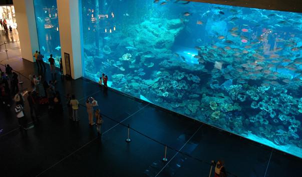 Аквариум в Дубай Молл: описание, фото, контакты, гиды, экскурсии