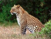 Национальный парк Jozani