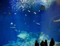 Аквариум Aquaworld