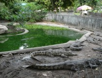 Крокодиловая ферма и театр обезьян