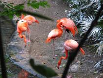 Зоопарк Xaman Ha Aviary