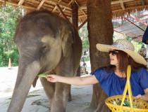 Лагерь слонов Sea View