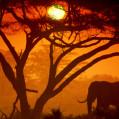 Амбосели национальный парк