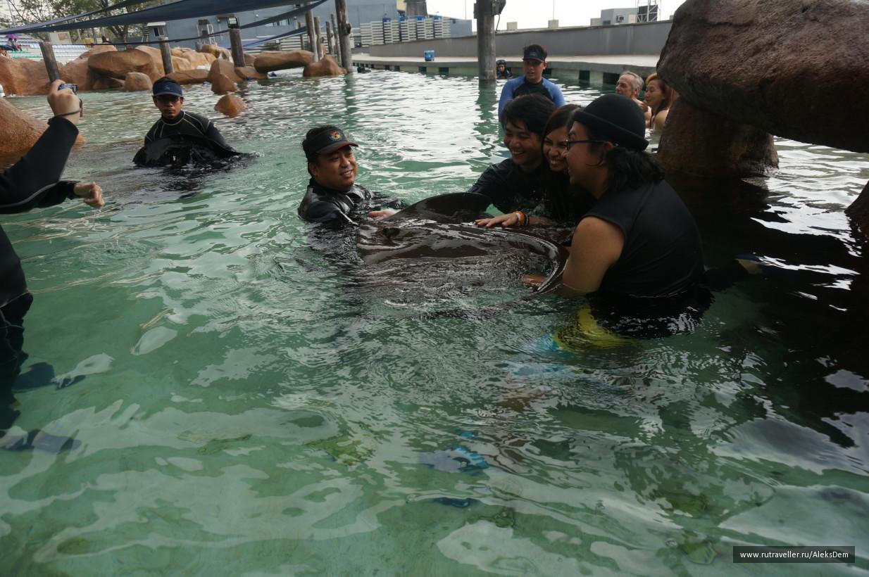 27.01.2015 год. Манила. Океанариум