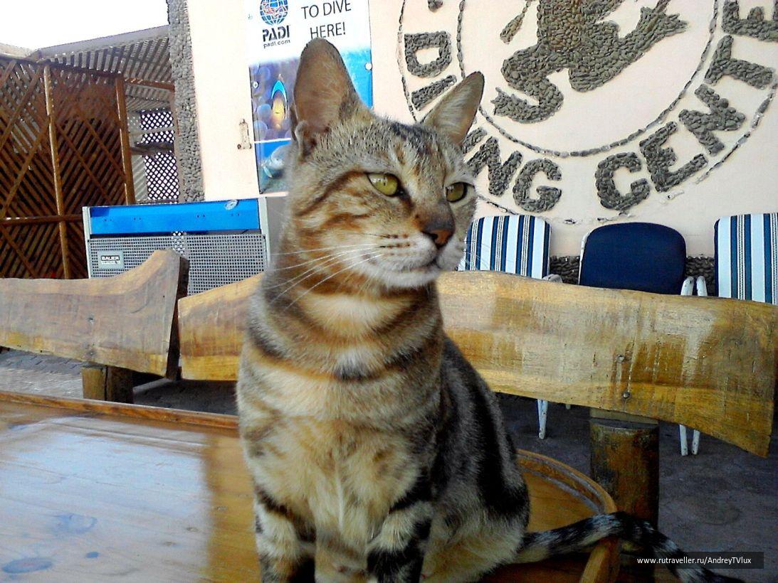 Хургада дайверский кот