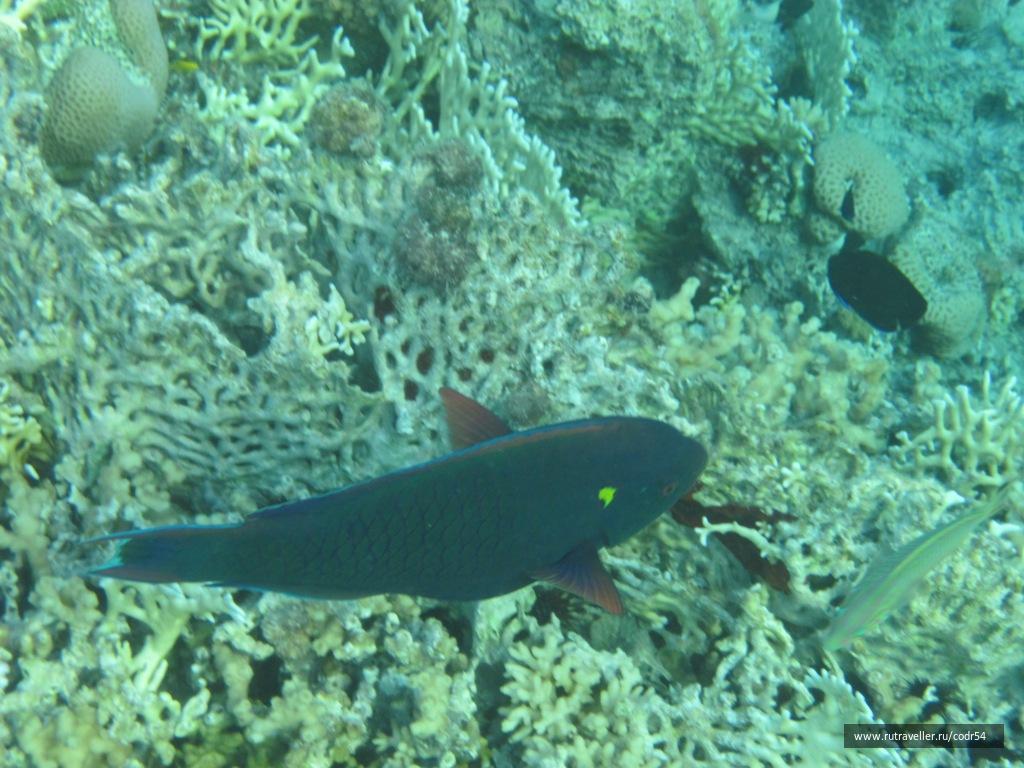 Обитатель Красного моря, сентябрь 2012