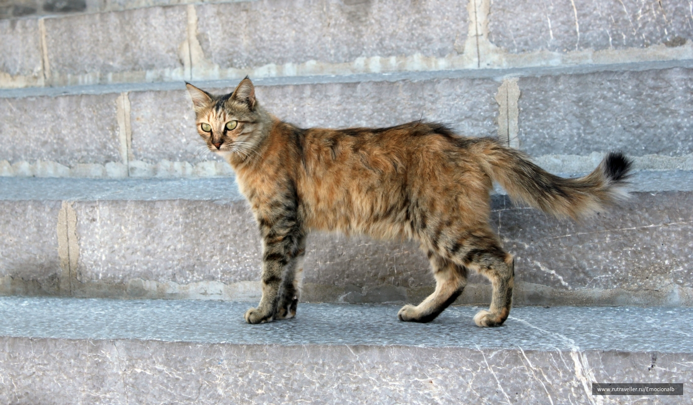 Кошки Монастыря Панормитис