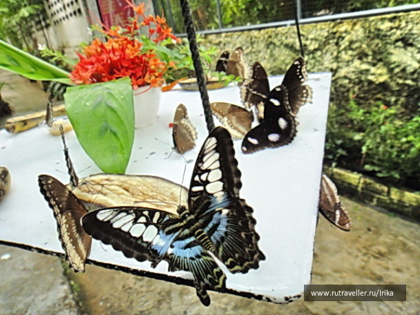 наследство автомобиль сад бабочек пхукет отзывы поиска