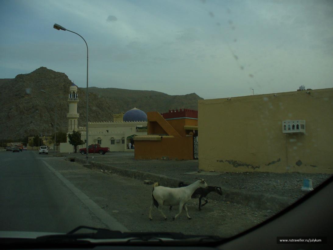 Собственно, сам Хасаб - рыбацкая деревушка с козами на улицах.