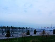 Пальмовая роща в Олимпийском парке Сочи