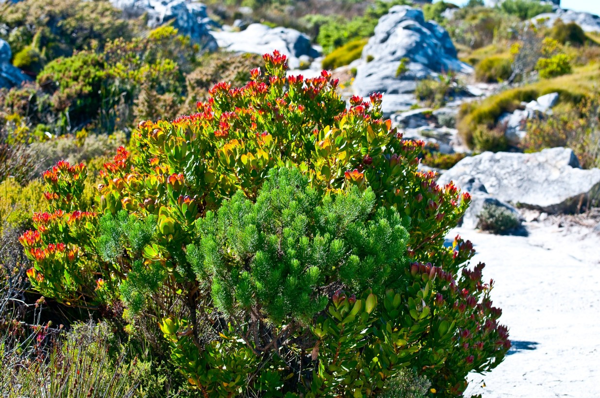 Table_Mountain_0070