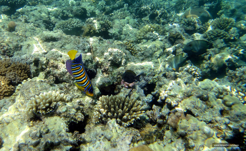 Подводный мир Макади