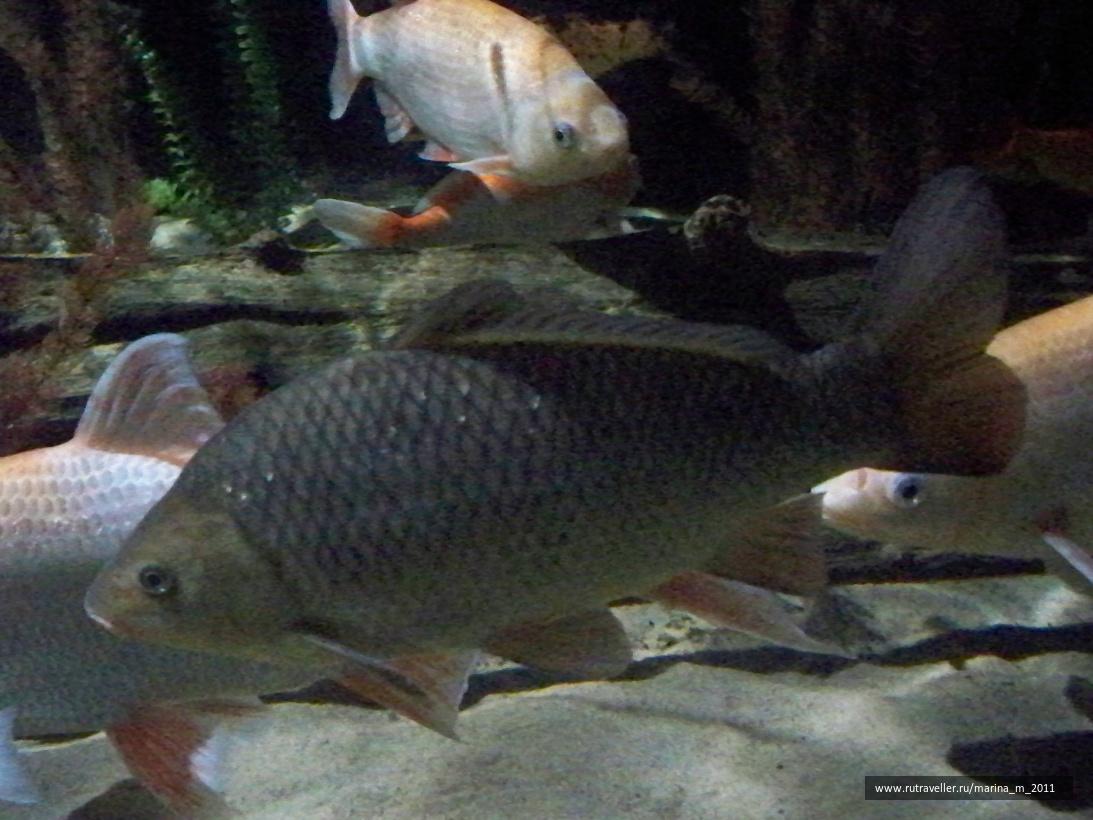 *НАША* рыба