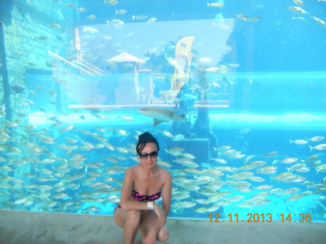 отдых в Дубаи 2013 231