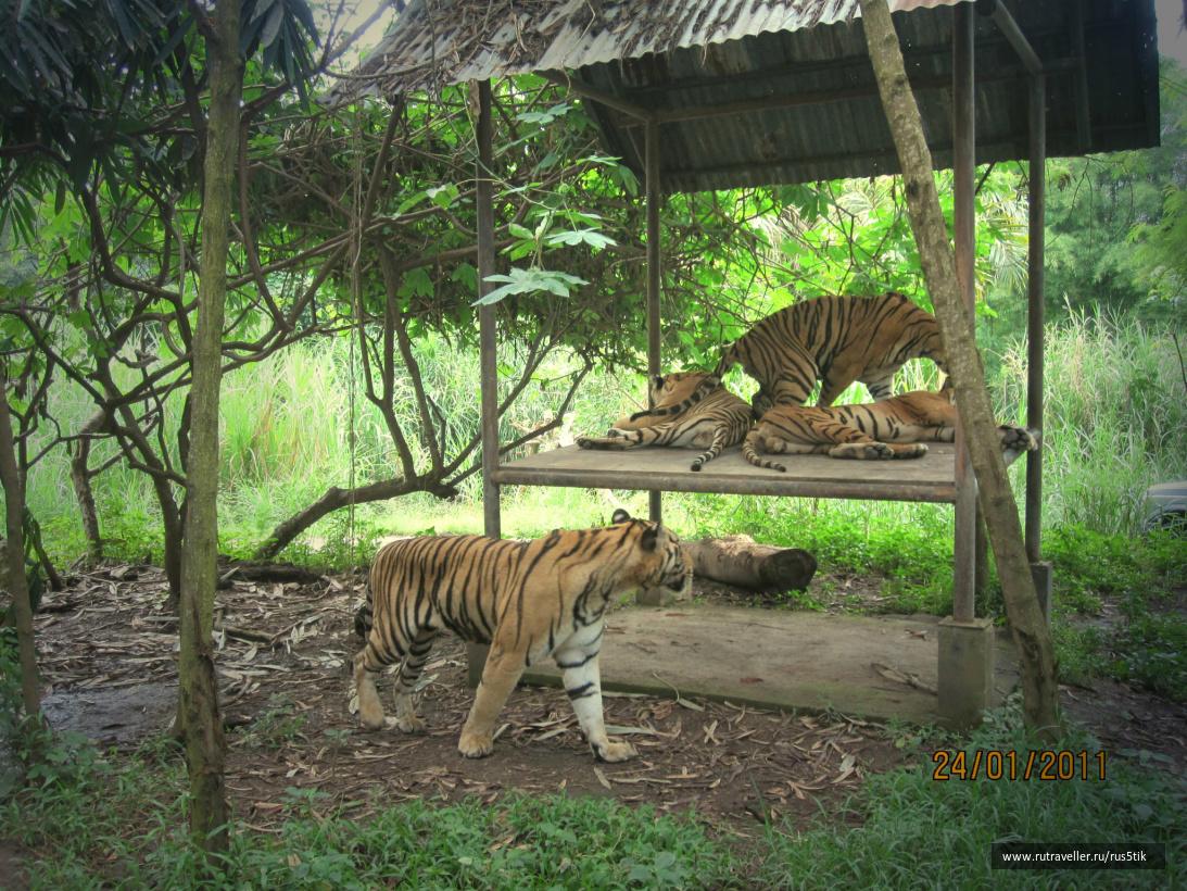 Бали2011 160