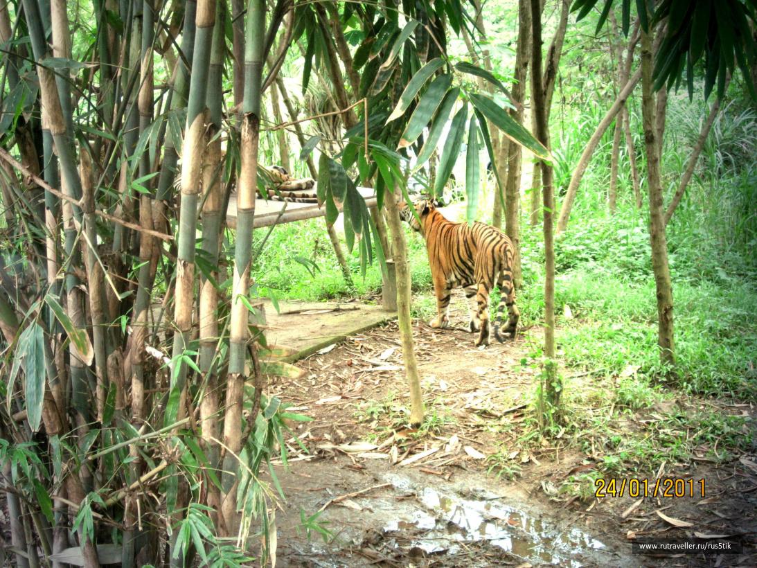 Бали2011 158