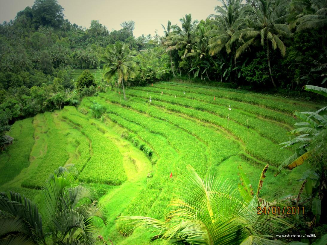 Бали2011 197