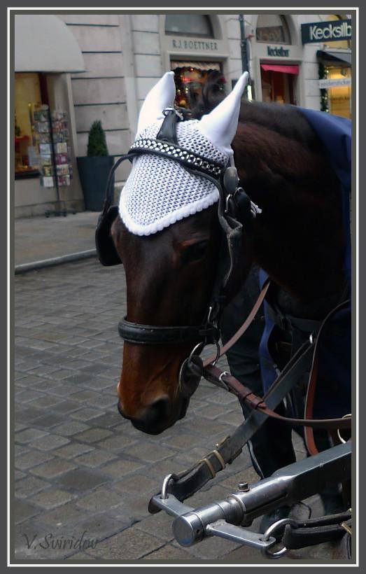 Венская лошадка.