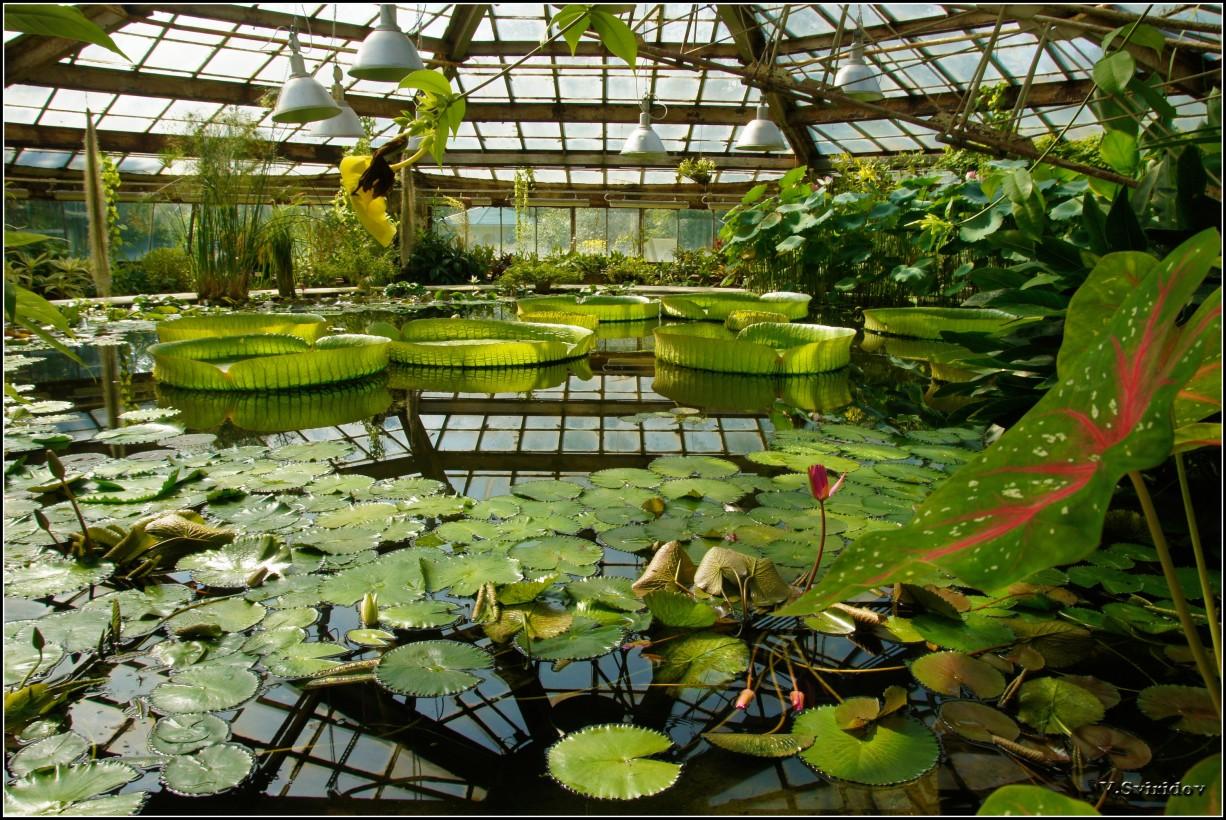 Ботанический сад. Павильон