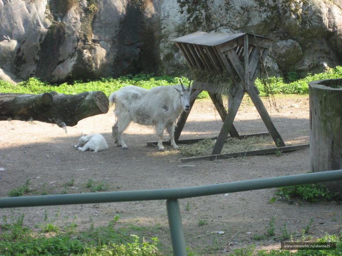 Зоопарк Хельсинки.