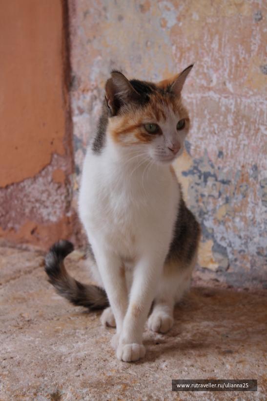 Котик в монастыре Агия Триада.